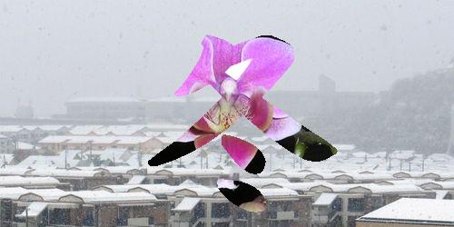 冬のミニ胡蝶