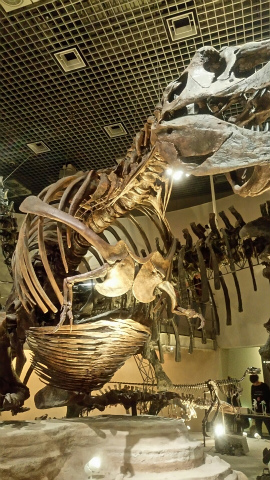 科学博物館6