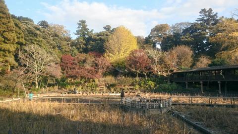 本土寺中庭