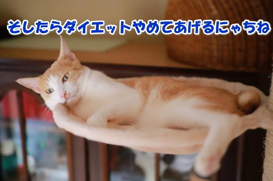 image_20180221225622366.jpg