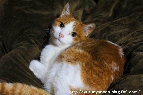 ブログNo.1112(来る日も来る日も看病猫)9