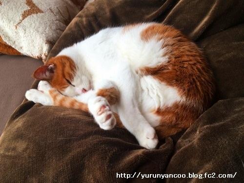 ブログNo.1112(来る日も来る日も看病猫)4