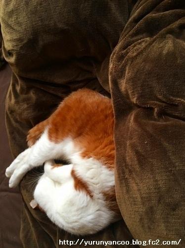 ブログNo.1112(来る日も来る日も看病猫)8