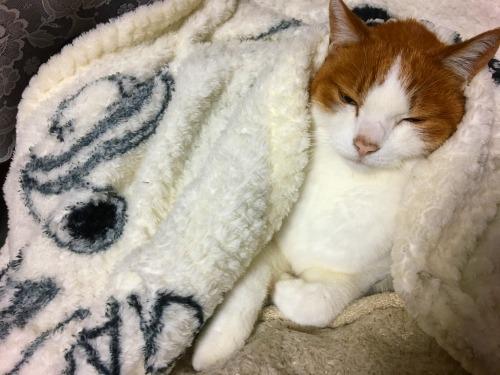 ブログNo.1136(眠くにゃぁ~い、眠くにゃい)2