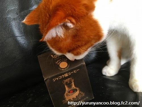 ブログNo.1138(ジャコウ猫コーヒー)2