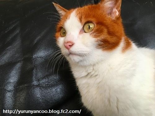 ブログNo.1138(ジャコウ猫コーヒー)3