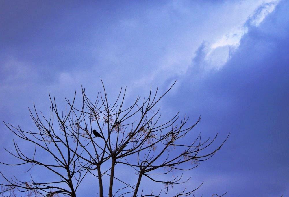 冬空に (2)